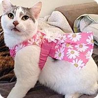 Adopt A Pet :: Stella - Palatine, IL