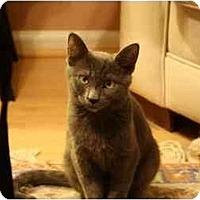 Adopt A Pet :: Marvin,Oliver,Louie - Arlington, VA