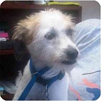 Adopt A Pet :: Reve in Houston - Houston, TX