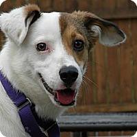Adopt A Pet :: Magic - Hastings, NY