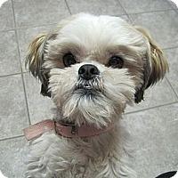 Adopt A Pet :: Gigi - Denver, CO