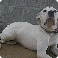 Adopt A Pet :: Sophie - dawson, GA