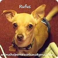 Adopt A Pet :: Rufus - New Orleans, LA