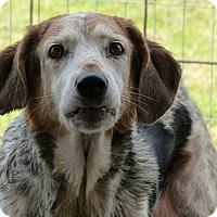 Adopt A Pet :: Sassy - Marlinton, WV