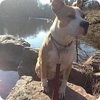 Adopt A Pet :: TIESAN - Kimberton, PA