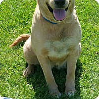 Adopt A Pet :: Blondie - Quincy, IN