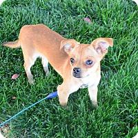 Adopt A Pet :: Addi - Meridian, ID