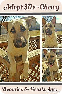 German Shepherd Dog Mix Dog for adoption in Wichita, Kansas - Chewy
