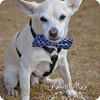 Adopt A Pet :: Nacho - Fort Valley, GA