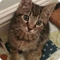 Adopt A Pet :: Randolf - North Highlands, CA