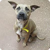 Adopt A Pet :: Suzie Q *Petsmart GB* - Appleton, WI