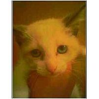 Adopt A Pet :: Rags - Owasso, OK