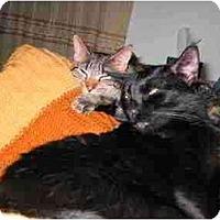 Adopt A Pet :: Boomerang - Proctor, MN