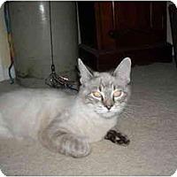 Adopt A Pet :: Frangelica - Arlington, VA