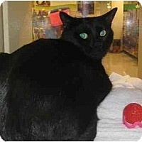 Adopt A Pet :: Scar - Jenkintown, PA