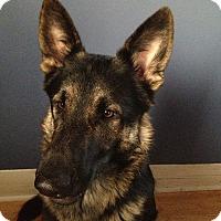 Adopt A Pet :: Hubble*Adoption Pending* - Mill Creek, WA