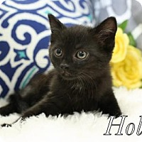 Adopt A Pet :: Hollye Female - knoxville, TN