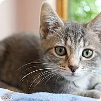 Adopt A Pet :: Anna - Ann Arbor, MI
