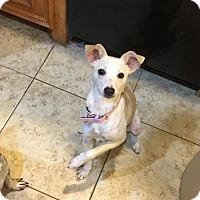 Adopt A Pet :: Josie Pye - Humble, TX