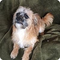 Adopt A Pet :: Samantha - Temecula, CA
