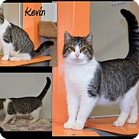 Adopt A Pet :: Kevin - Channahon, IL