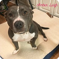 Adopt A Pet :: Amber Leigh - Columbia, TN