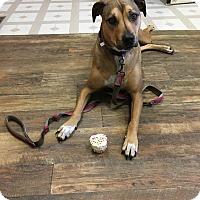 Adopt A Pet :: Nala - Red Wing, MN