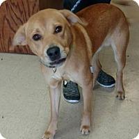 Adopt A Pet :: RB3 - Ashtabula, OH