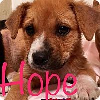 Adopt A Pet :: Hope - ROSENBERG, TX