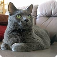 Adopt A Pet :: Mastropiero - Toronto, ON