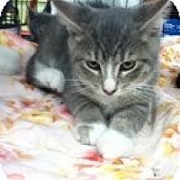 Adopt A Pet :: Angus - Riverside, RI