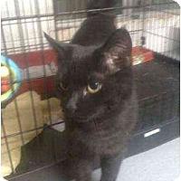 Adopt A Pet :: Dillon - Moses Lake, WA