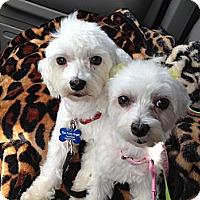 Adopt A Pet :: Jack - Rancho Mirage, CA