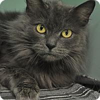 Adopt A Pet :: Maggie - Rockaway, NJ