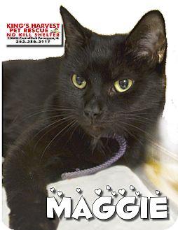 Domestic Shorthair Cat for adoption in Davenport, Iowa - Maggie FIV+