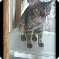 Adopt A Pet :: Lawni - london, ON