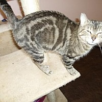 Adopt A Pet :: **Brooke - Montello, WI