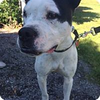Adopt A Pet :: Greta - Vancouver, WA
