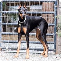Adopt A Pet :: RINGER - Greensboro, NC
