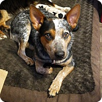Adopt A Pet :: Savannah - Malakoff, TX