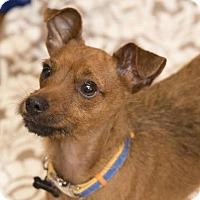 Adopt A Pet :: Charlie - Barrington Hills, IL