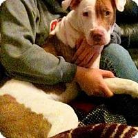 Adopt A Pet :: Coco II - Lincoln, CA