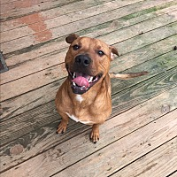 Adopt A Pet :: Charlie - Stahlstown, PA