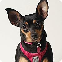 Adopt A Pet :: Arie - Oakland, CA
