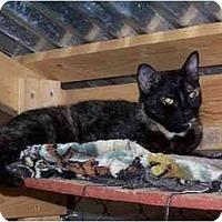 Adopt A Pet :: Tessa - Winnsboro, SC