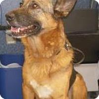 Adopt A Pet :: Sadie - Inverness, FL