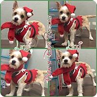Adopt A Pet :: Lexi - South Gate, CA