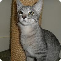 Adopt A Pet :: Saxton - Milwaukee, WI