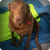 Adopt A Pet :: Harry - Muskegon, MI