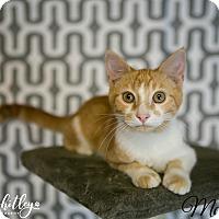Adopt A Pet :: McEntire - Columbia, TN